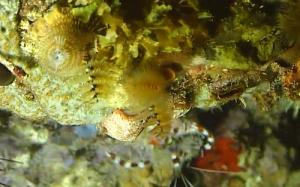 shrimp virgin gorda
