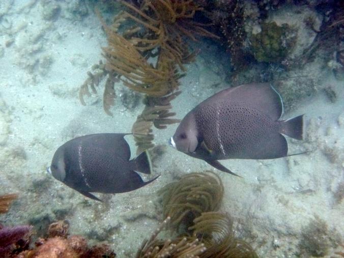 Culebra 241
